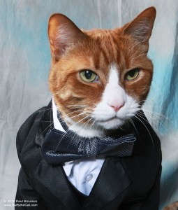 Buffy in a Tux - Buffy the Cat photos by Paul Smulson, buffythecat.com