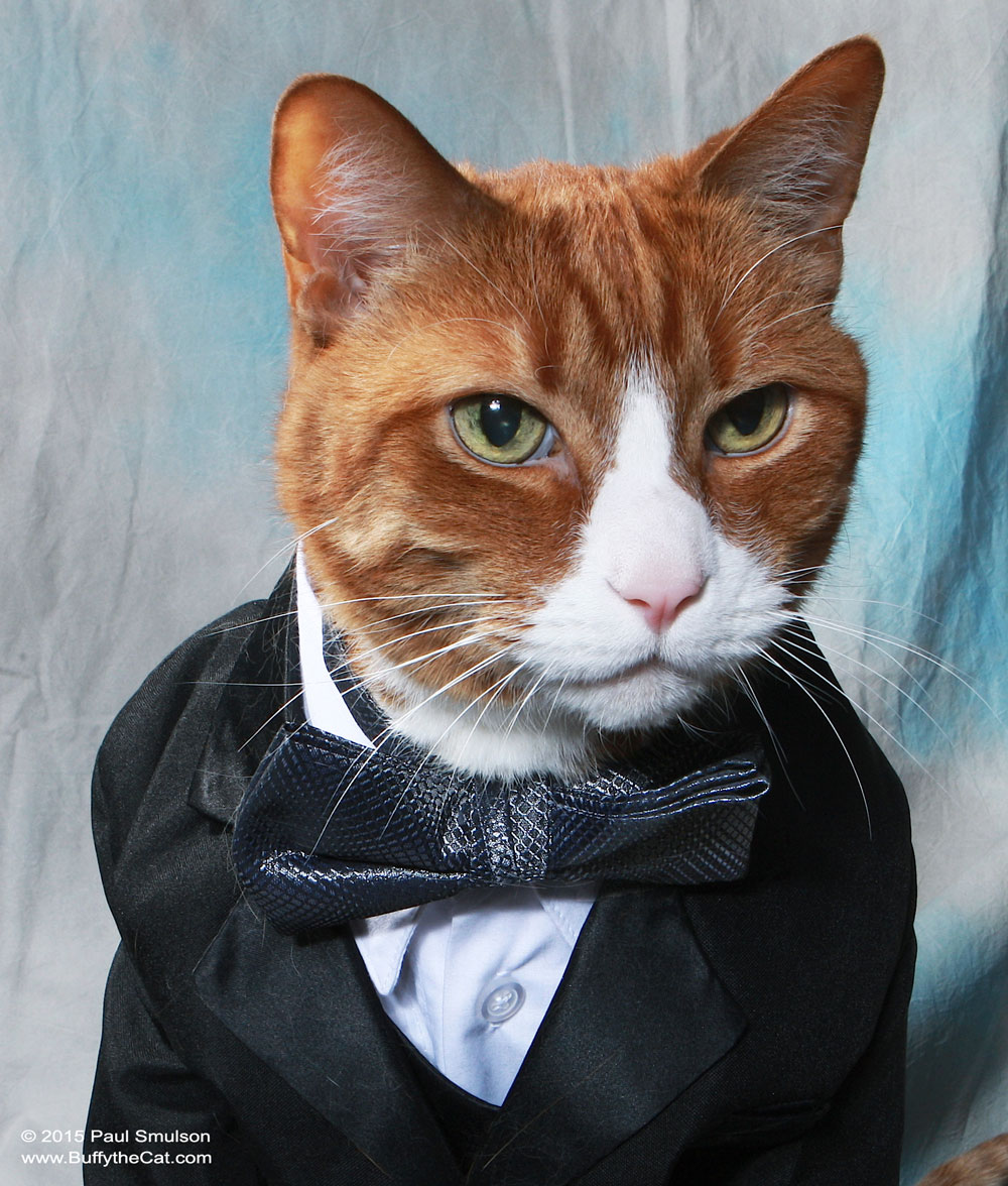 Buffy the Cat - Making the Most of All Nine Lives - The Extraordinary Life of Buffy the Cat