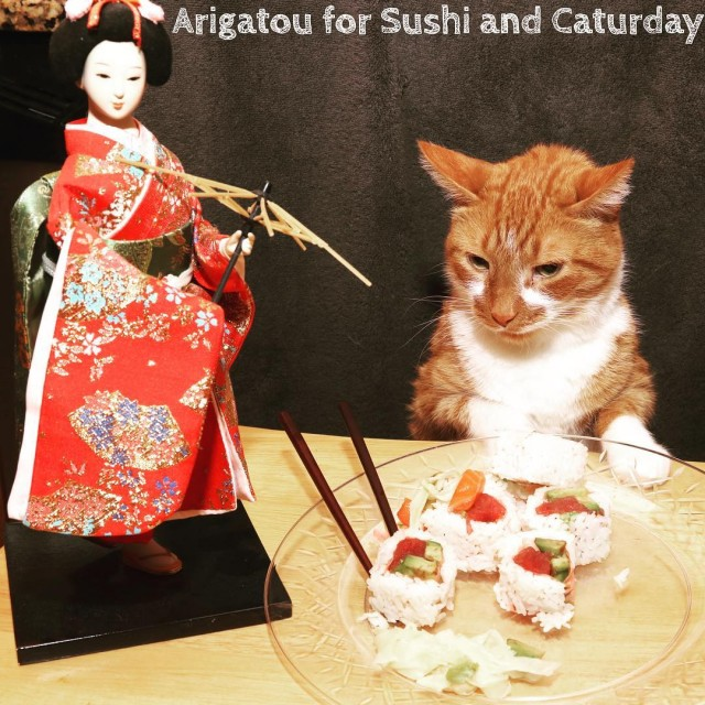 Has there ever been a more appropriate CATURDAY than NATIONALSUSHIDAYhellip