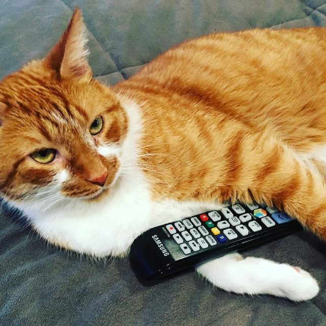 This Caturday Im getting in some quality binge watching! netflixhellip