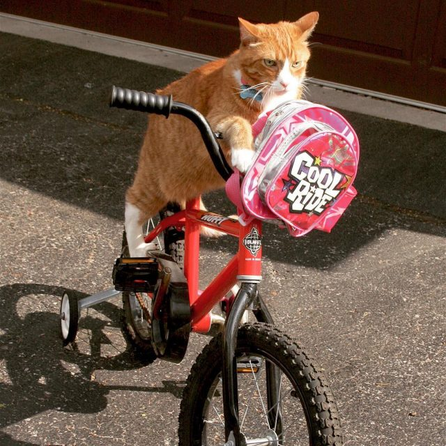 Just training for next years letourdefrance tourdefrance cyclist tabby gingerhellip