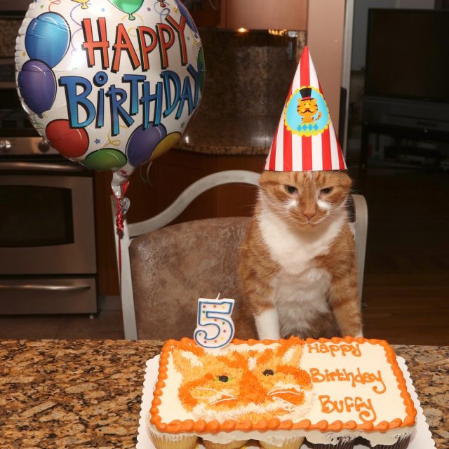 Happy Birthday to MEEEE! birthday cats tabby orangecat ginger catbirthdayhellip