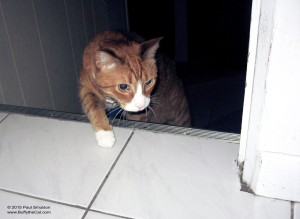 Buffy in the morning - Buffy the Cat photos by Paul Smulson, buffythecat.com