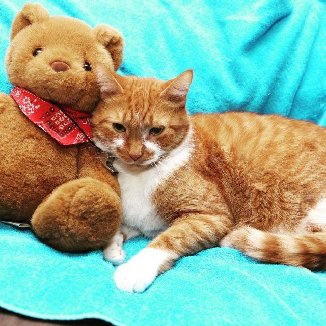 Its just me and my teddy! Happy teddybearday  tabbyhellip