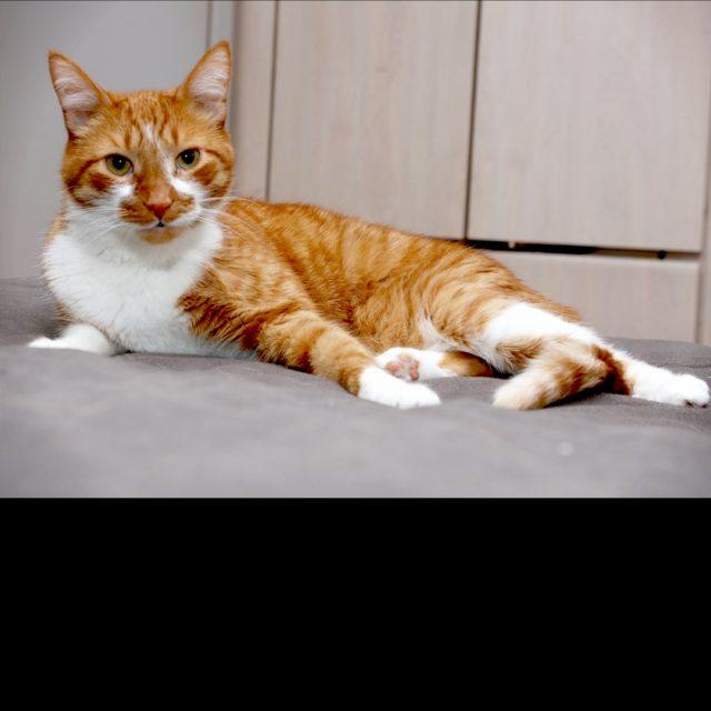 I need LOVE! tabby ginger orangecat cat lovecats cuddle kittycathellip