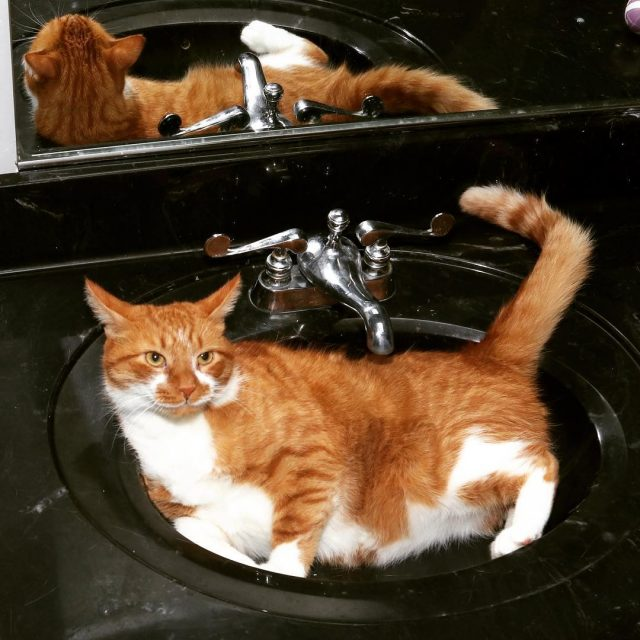 Do you ever get that sinking feeling? orangecat tabby cathellip