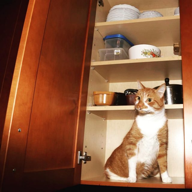 Happy Caturday! Just making sure all the cabinets are freehellip