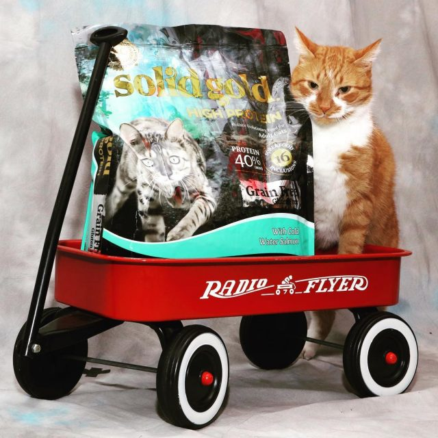 Its Caturday and Buffy hitches his wagon to Solid Goldhellip