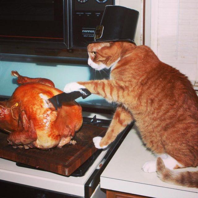 Happy Thanksgiving! happythankgiving Continue Reading rarr