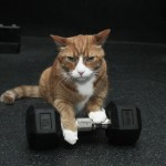 Buffy with weights - Buffy the Cat photos by Paul Smulson, buffythecat.com