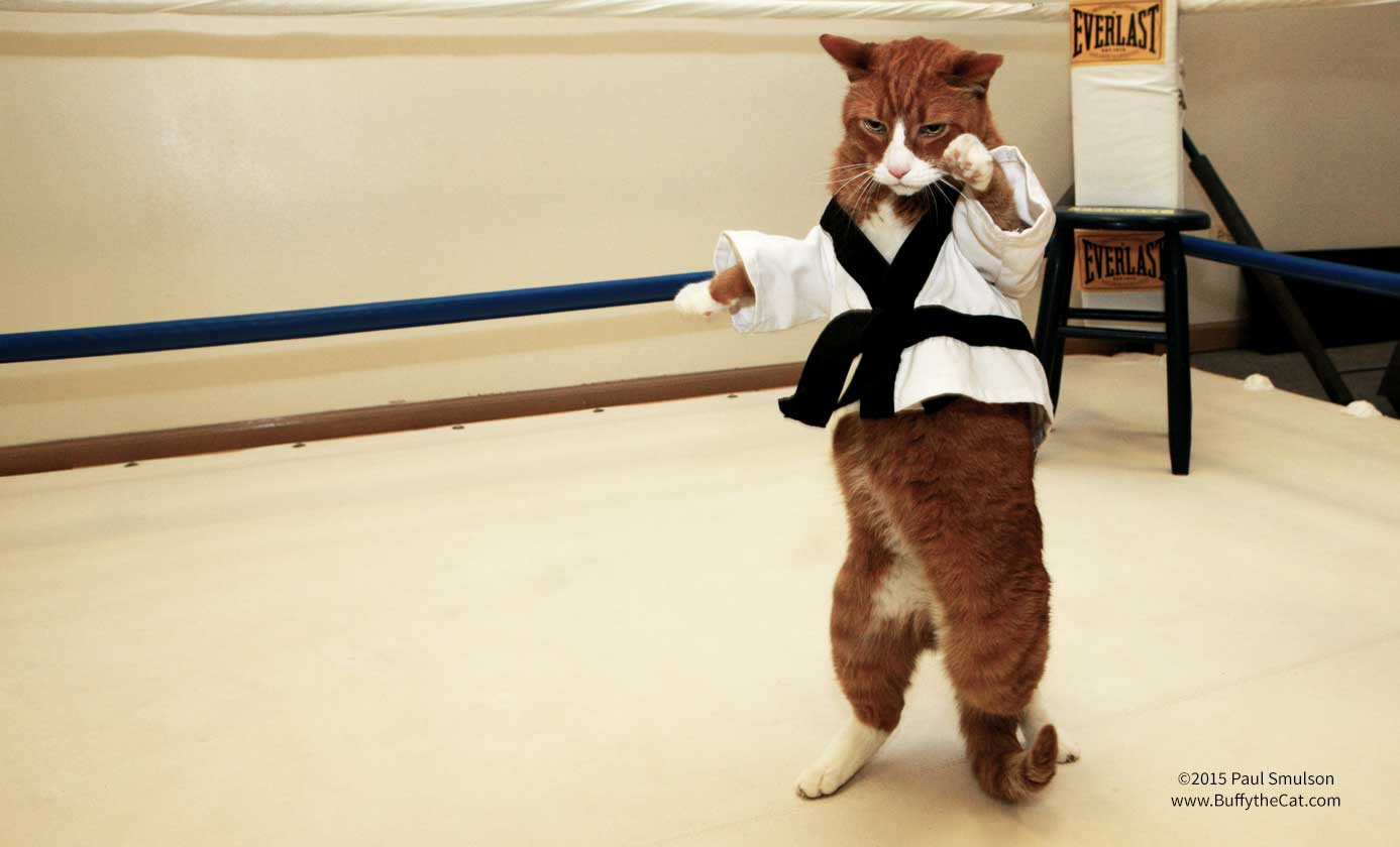 Buffy the Cat does Karate - ©2015 Paul Smulson, BuffytheCat.com