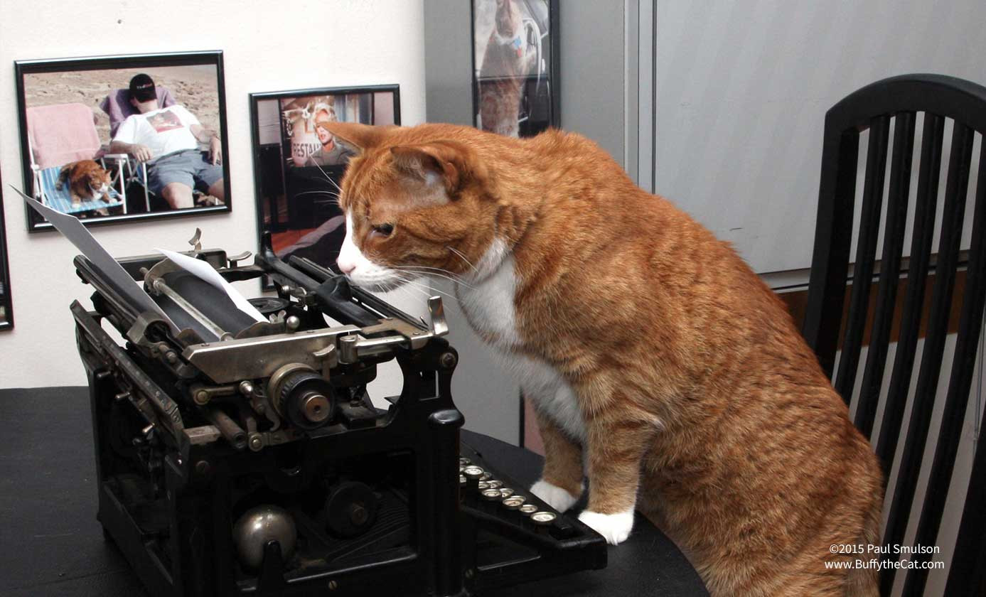 Buffy the Cat works on his book - ©2015 Paul Smulson, BuffytheCat.com